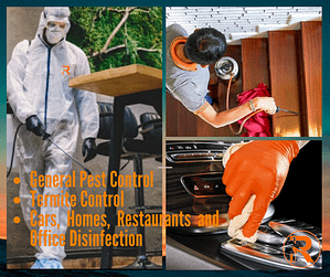 Reacto Pest Control and Disinfection Services